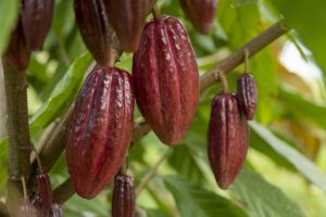 Hard Facts About Solid Chocolate: Types, Production, and Uses for Chocolate